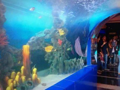 Aquarium3MAIN