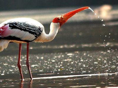 Ranganathittu-Bird-Sanctuary