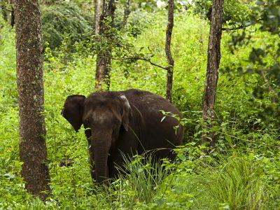Elephant-Herd-in-BR-Hills-1