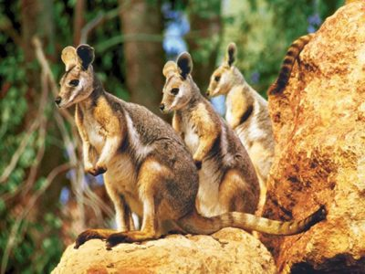 sydney_Wildlife_world