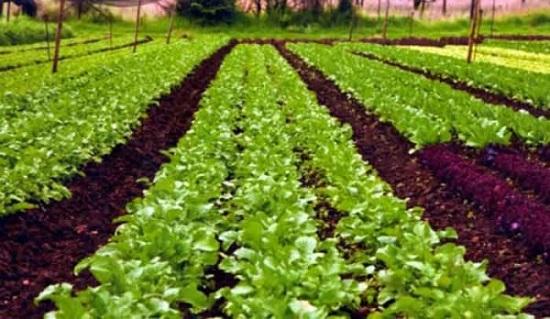 Organic-Farming.-1