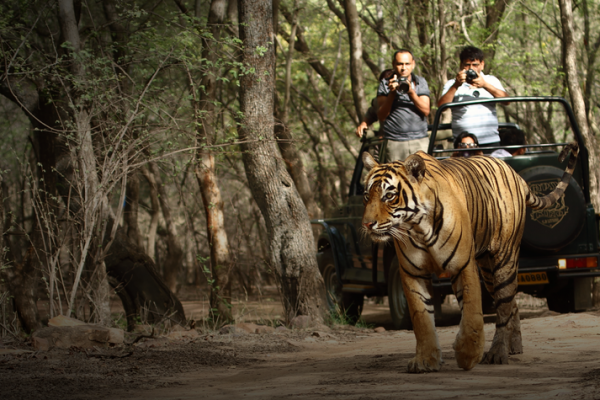 feature-image-ranthambore