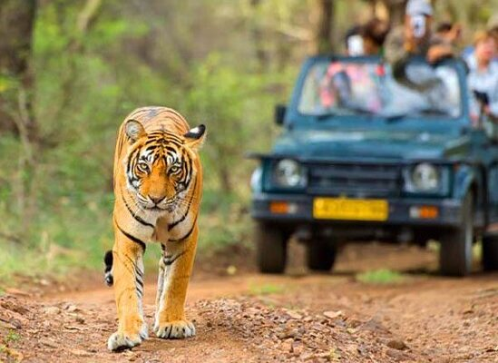 rajasthan-wildlife-tour-600x450
