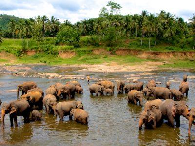 pinnawala-elephant-orphanage-sri-lanka-4